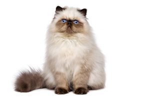 Grooming services for all cat breeds