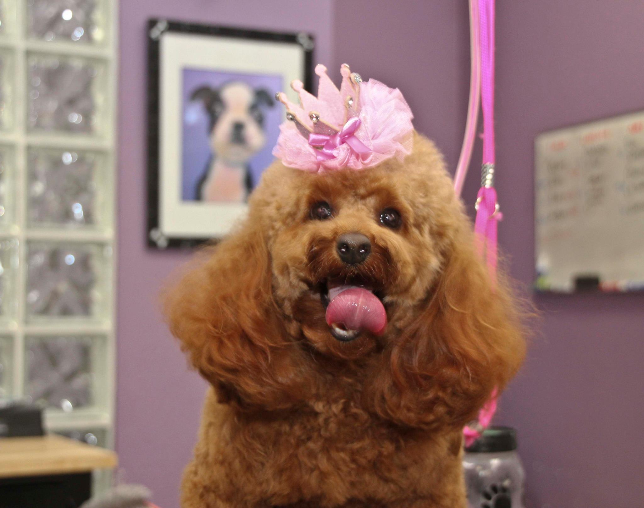 Loli models the tiarra scrunchie