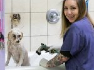 Amy bathing a dog at Critter Clippers