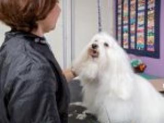 Larissa the dog groomer