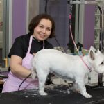 Larissa gives this Westie a classic cut