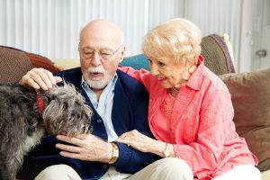 Estate Planning for Your Pet